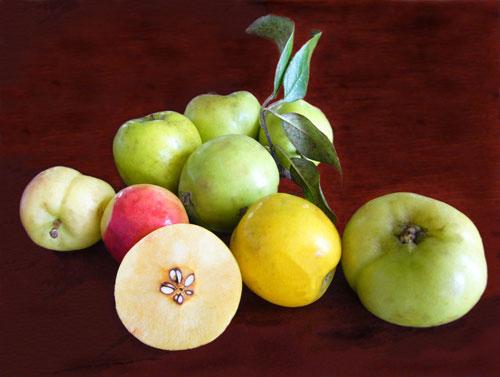 công dụng của dấm táo - Táo mèo có vô vàn công dụng với sức khỏe của con người