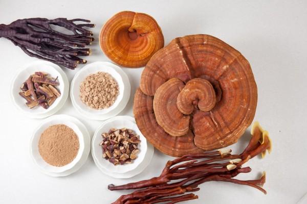 Công dụng của nấm linh chi dược thảo hạng nhất