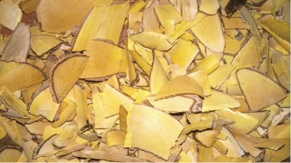 Có thể phơi khô lá, thân cây mật gấu để sử dụng - cong dung cua cay mat gau