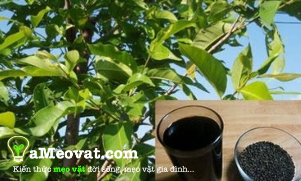 3 Tác dụng của lá vối đối với sức khỏe của bạn - Công dụng của lá vối