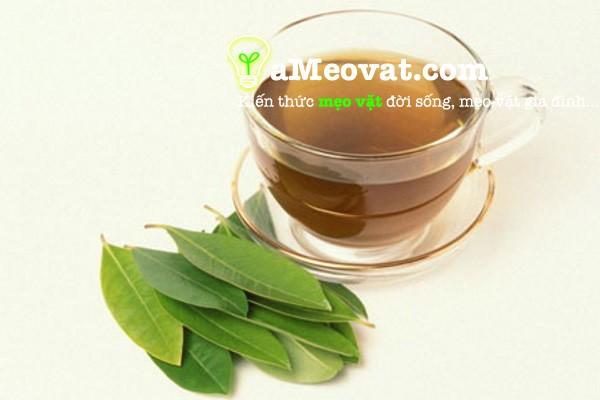 Tác dụng của lá vối trong trị bệnh Gout và tiểu đường