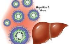 Viêm gan B có chữa được bằng cây chó đẻ?