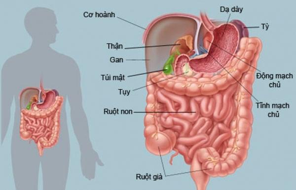 Hỗ trợ chữa một số bệnh liên quan tới hệ tiêu hoá - tác dụng của cây lá đắng