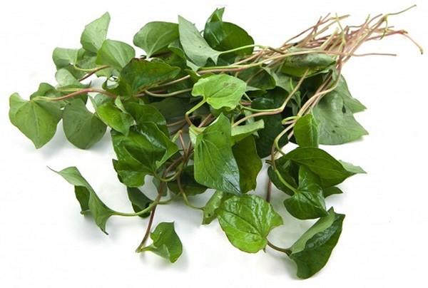 Đây là loại cây thân thảo - trị mụn bằng rau diếp cá