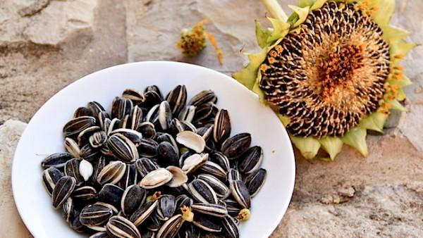 Hạt hướng dương chứa rất nhiều hàm lượng vitamin này - vitamin b6 có tác dụng gì