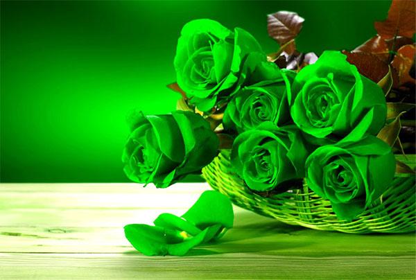 Hoa hồng xanh - cách cắm hoa để bàn đẹp