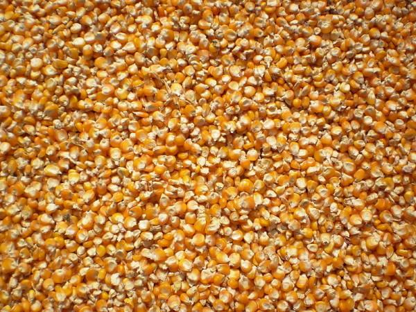 Tách lấy hạt ngô - cách làm ngô cay