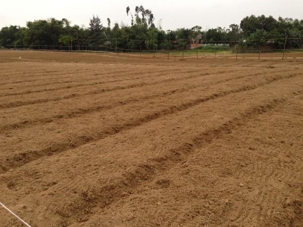 Làm đất, đánh luống trồng rau - cách trồng rau cải cúc