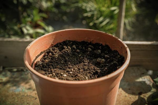Chuẩn bị đất trồng cây - cách trồng hoa hồng trong chậu