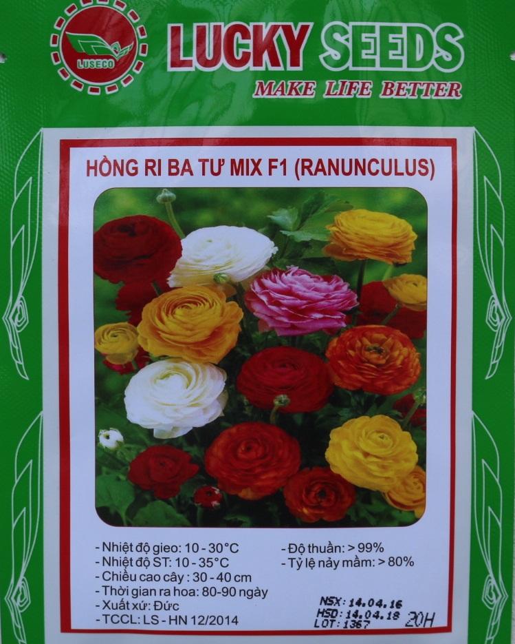 Hạt giống hoa hồng - cách trồng hoa hồng leo