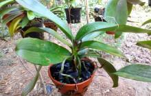 2 Cách trồng hoa lan nhanh nở hoa, ít sâu bệnh