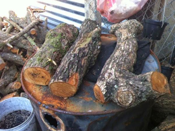 Miếng gỗ trồng hoa lan - cách trồng hoa lan trên gỗ
