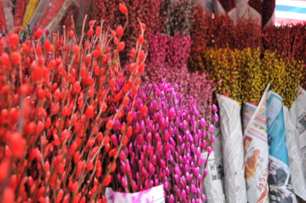 Hoa tầm xuân - Nụ tầm xuân là biểu tượng của hạnh phúc trọn vẹn