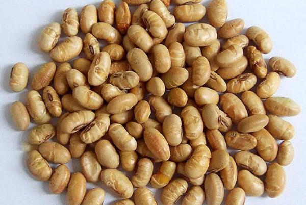 Rang chín rồi vỡ đôi hạt đậu tương - tương bần