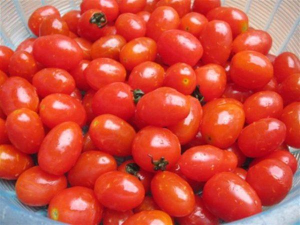 Chọn những quả cà chua tươi và mọng