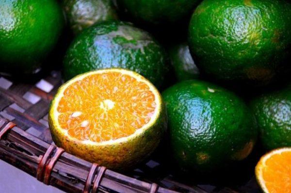 Chọn những quả cam thật tươi ngon
