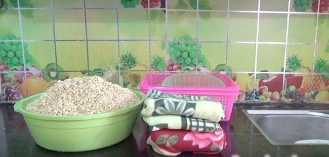 Cách làm mầm đậu nành